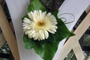 Pew wedding flowers with white gerberas with ivy leaf