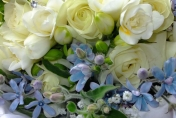 Hand tied wedding bouquet with cream freesias, cream roses and blue tweedia
